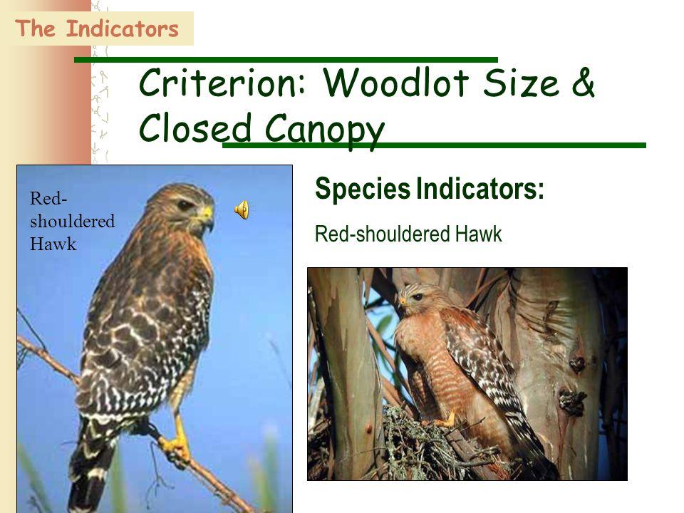 34 Red- shouldered Hawk The Indicators Criterion: Woodlot Size & Closed Canopy Species Indicators: Red-shouldered Hawk