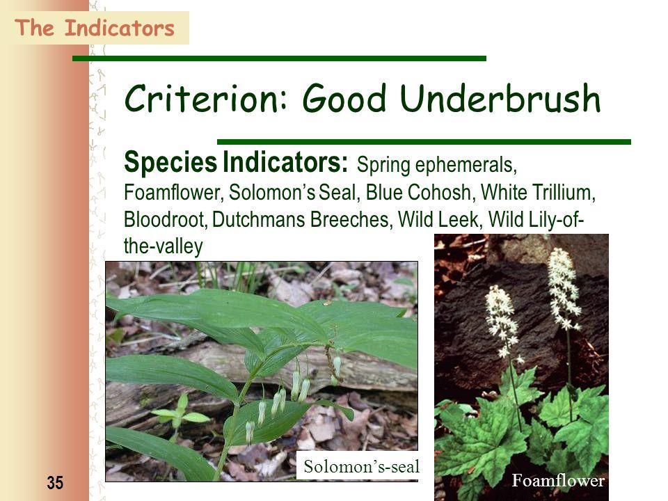 35 Foamflower Solomon's-seal The Indicators Criterion: Good Underbrush Species Indicators: Spring ephemerals, Foamflower, Solomon's Seal, Blue Cohosh,