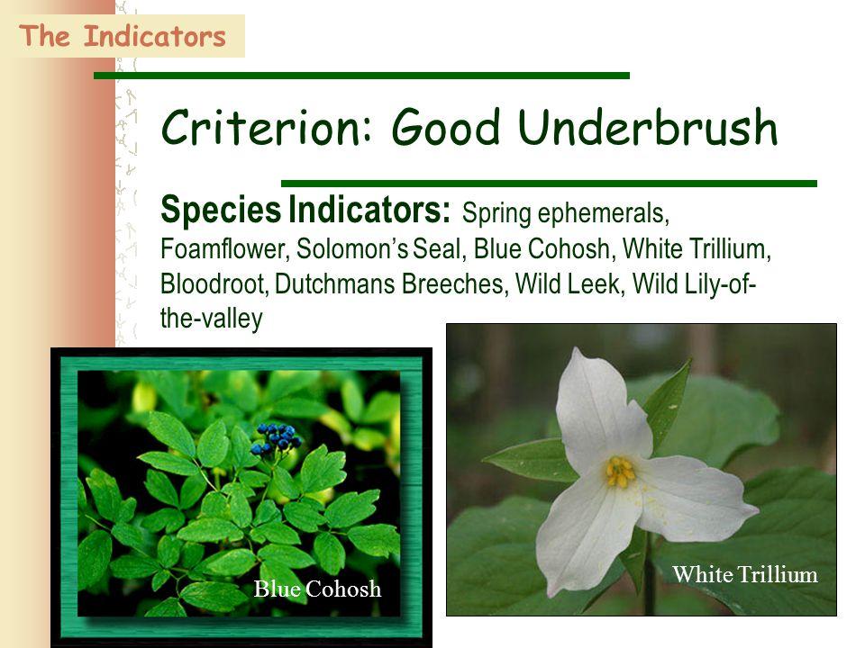 36 The Indicators Criterion: Good Underbrush Species Indicators: Spring ephemerals, Foamflower, Solomon's Seal, Blue Cohosh, White Trillium, Bloodroot