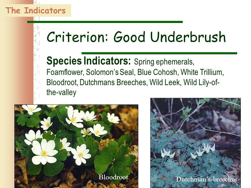 37 Bloodroot Dutchman's-breeches The Indicators Criterion: Good Underbrush Species Indicators: Spring ephemerals, Foamflower, Solomon's Seal, Blue Coh