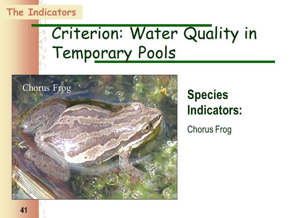 41 Chorus Frog The Indicators Criterion: Water Quality in Temporary Pools Species Indicators: Chorus Frog