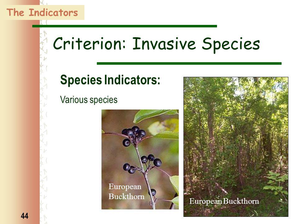 44 The Indicators Criterion: Invasive Species Species Indicators: Various species European Buckthorn