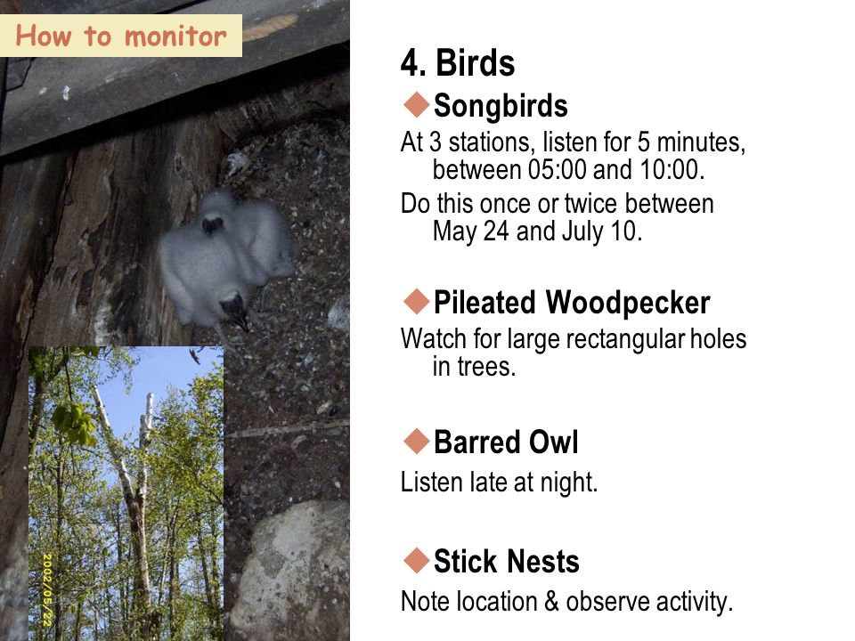 55 How to monitor 4. Birds  Songbirds At 3 stations, listen for 5 minutes, between 05:00 and 10:00. Do this once or twice between May 24 and July 10.