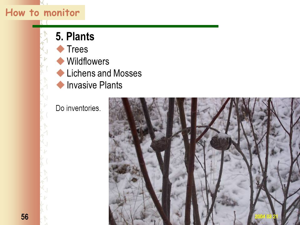 56 How to monitor 5. Plants  Trees  Wildflowers  Lichens and Mosses  Invasive Plants Do inventories.