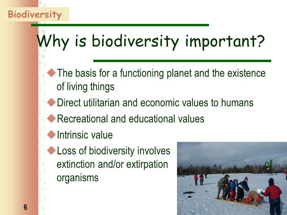 6 Why is biodiversity important?  The basis for a functioning planet and the existence of living things  Direct utilitarian and economic values to h