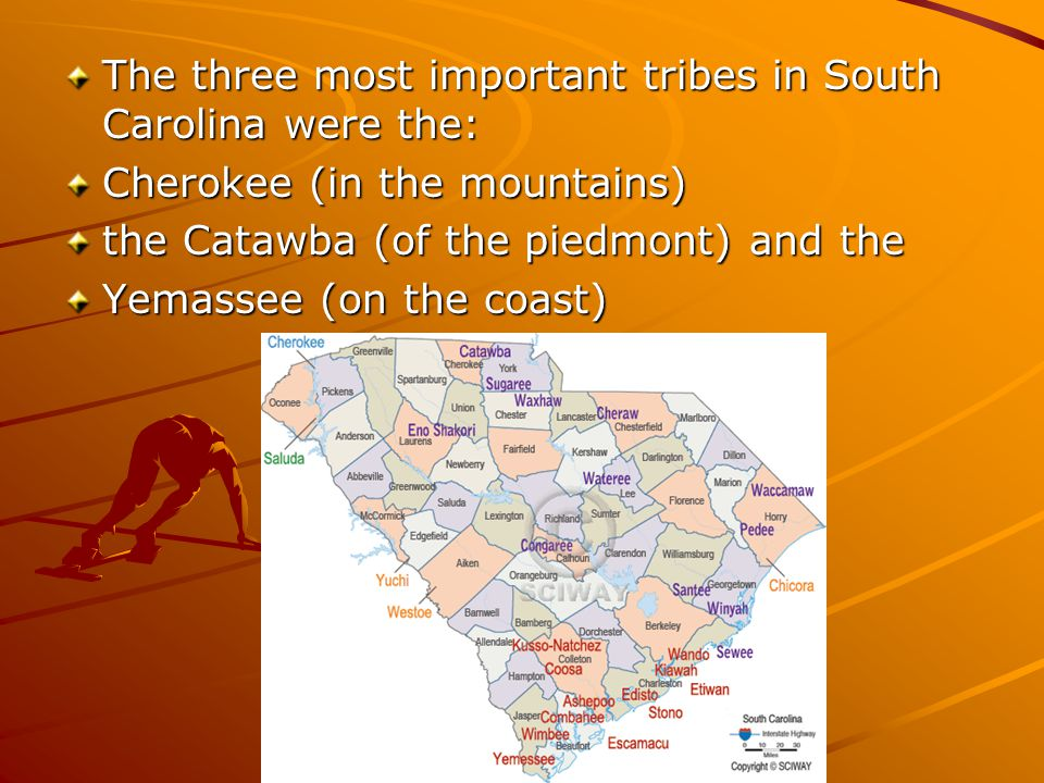 The three most important tribes in South Carolina were the: Cherokee (in the mountains) the Catawba (of the piedmont) and the Yemassee (on the coast)