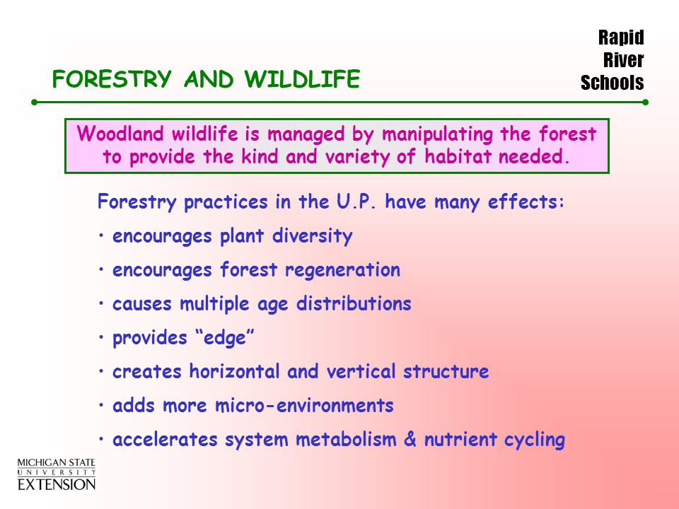 Rapid River Schools FORESTRY AND WILDLIFE Woodland wildlife is managed by manipulating the forest to provide the kind and variety of habitat needed.