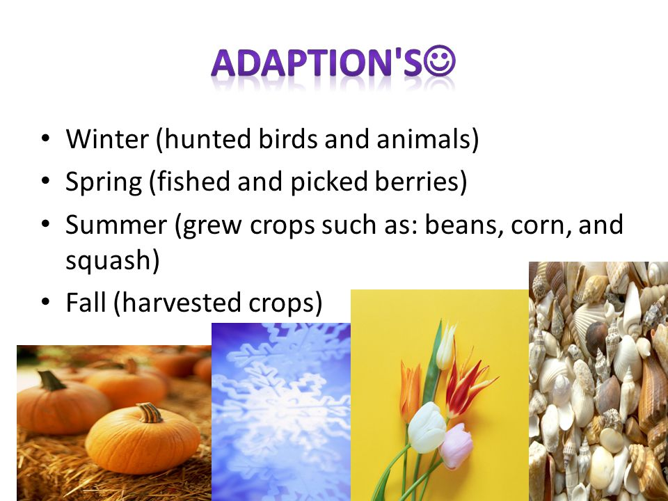 Winter (hunted birds and animals) Spring (fished and picked berries) Summer (grew crops such as: beans, corn, and squash) Fall (harvested crops)