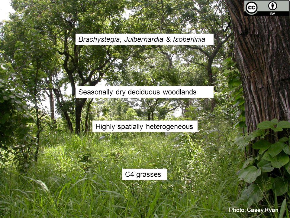 Photo: Casey Ryan Brachystegia, Julbernardia & Isoberlinia C4 grasses Seasonally dry deciduous woodlands Highly spatially heterogeneous