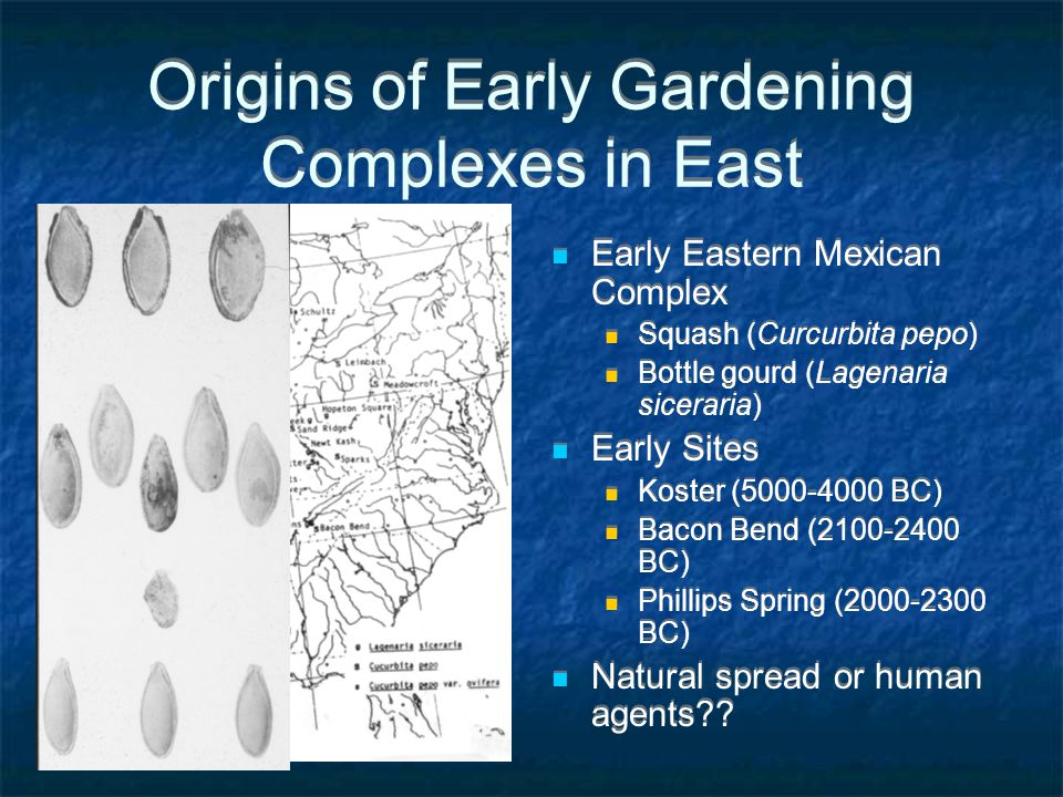 Origins of Early Gardening Complexes in East Early Eastern Mexican Complex Squash (Curcurbita pepo) Bottle gourd (Lagenaria siceraria) Early Sites Koster (5000-4000 BC) Bacon Bend (2100-2400 BC) Phillips Spring (2000-2300 BC) Natural spread or human agents