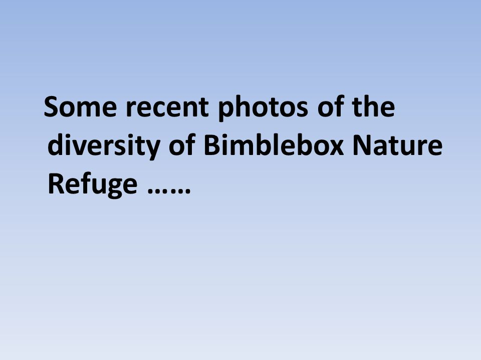 Some recent photos of the diversity of Bimblebox Nature Refuge ……