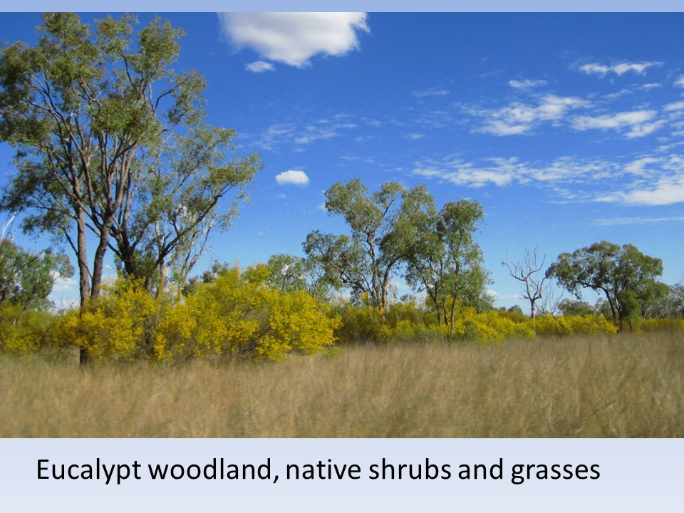 Eucalypt woodland, native shrubs and grasses