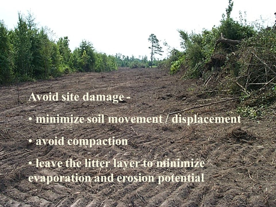 Avoid site damage - minimize soil movement / displacement avoid compaction leave the litter layer to minimize evaporation and erosion potential