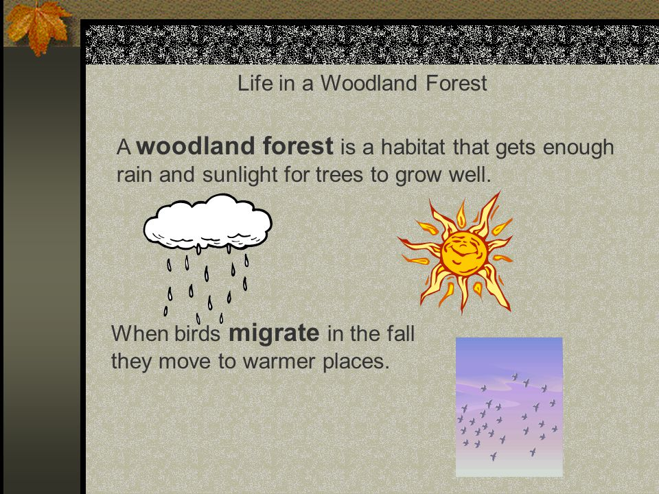 The four seasons of a woodland forest are: spring, summer, fall, and winter.