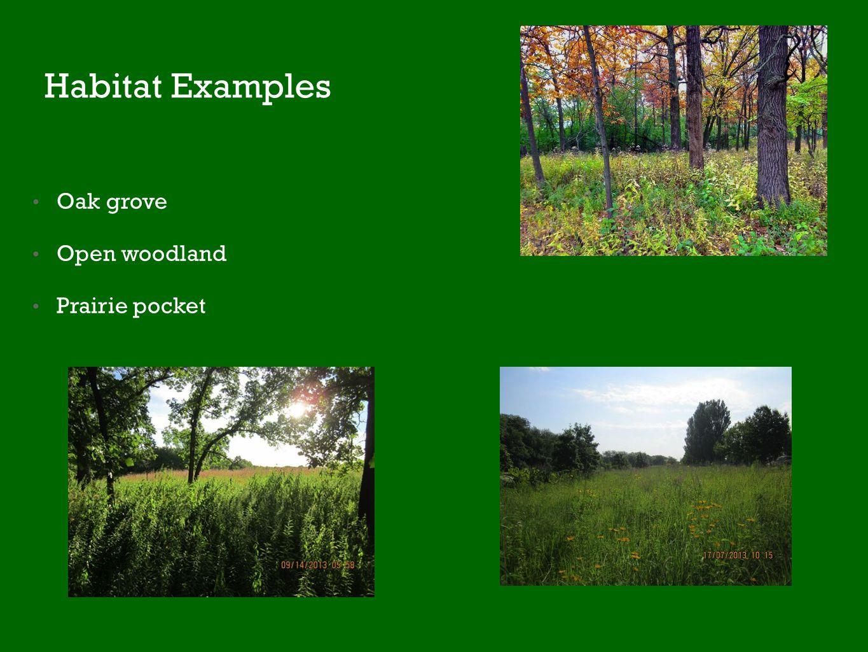 Habitat Examples Oak grove Open woodland Prairie pocket
