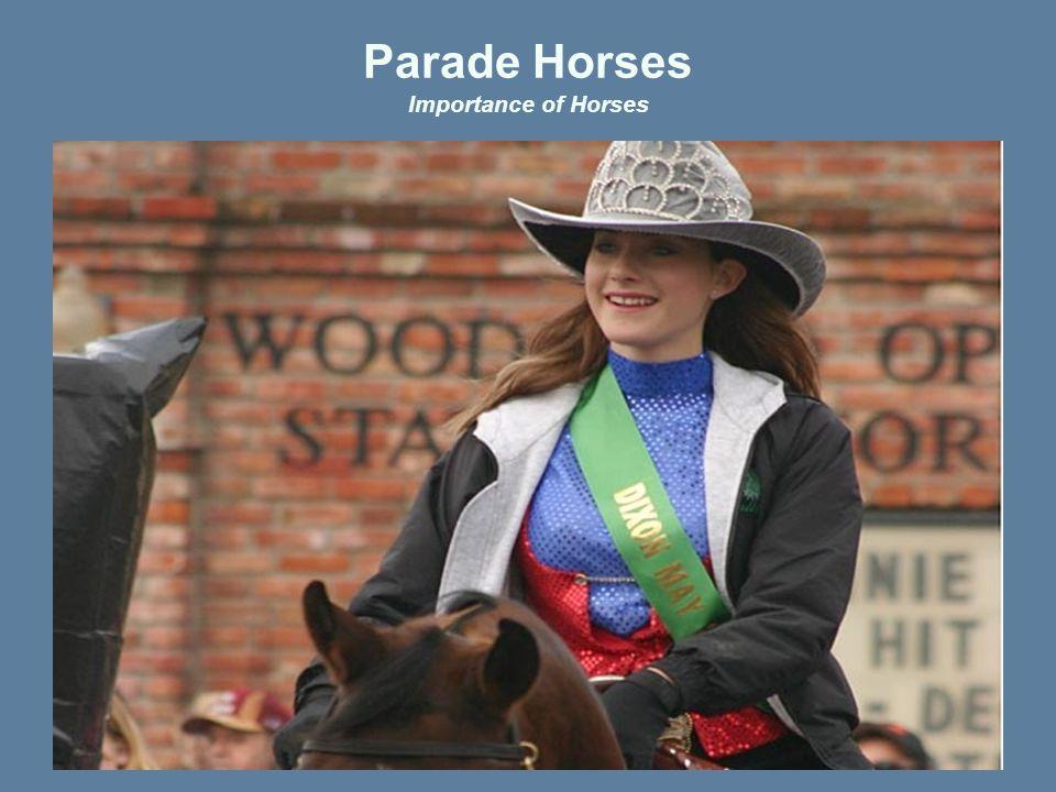 Parade Horses Importance of Horses