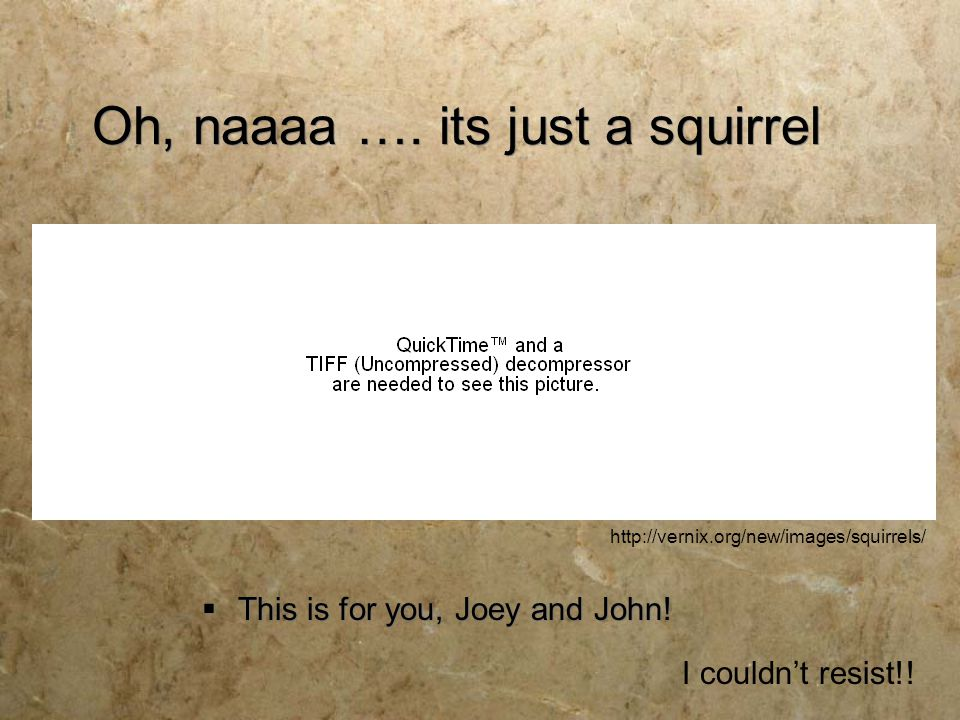 Oh, naaaa …. its just a squirrel  This is for you, Joey and John! I couldn't resist!! http://vernix.org/new/images/squirrels/