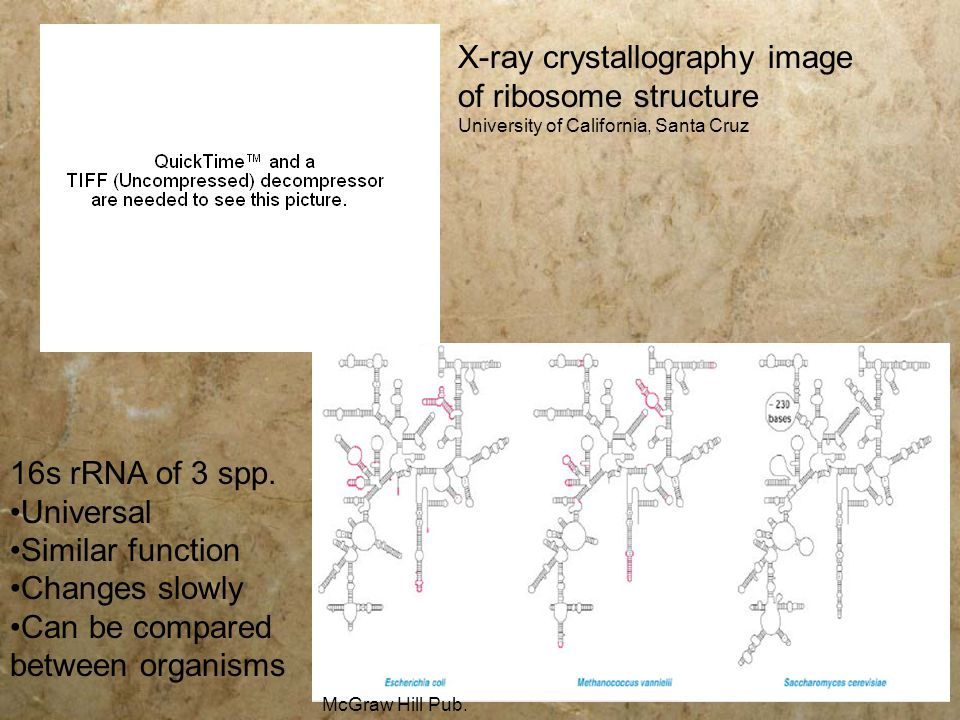 X-ray crystallography image of ribosome structure University of California, Santa Cruz 16s rRNA of 3 spp. Universal Similar function Changes slowly Ca
