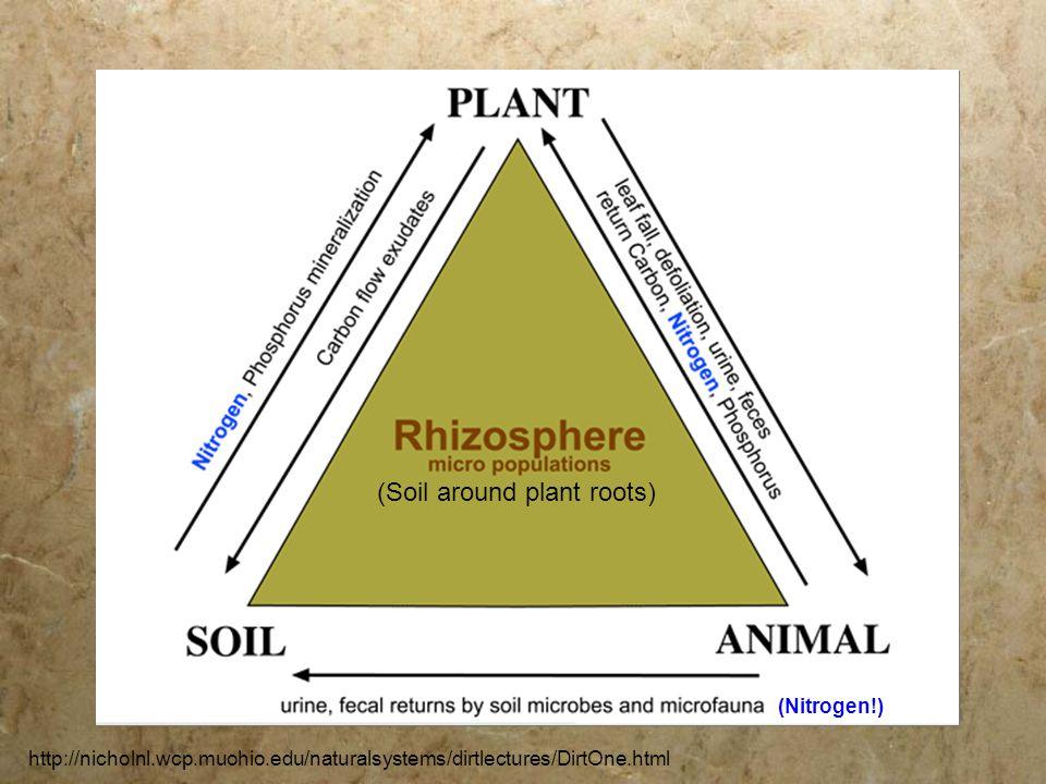 http://nicholnl.wcp.muohio.edu/naturalsystems/dirtlectures/DirtOne.html (Soil around plant roots) (Nitrogen!)