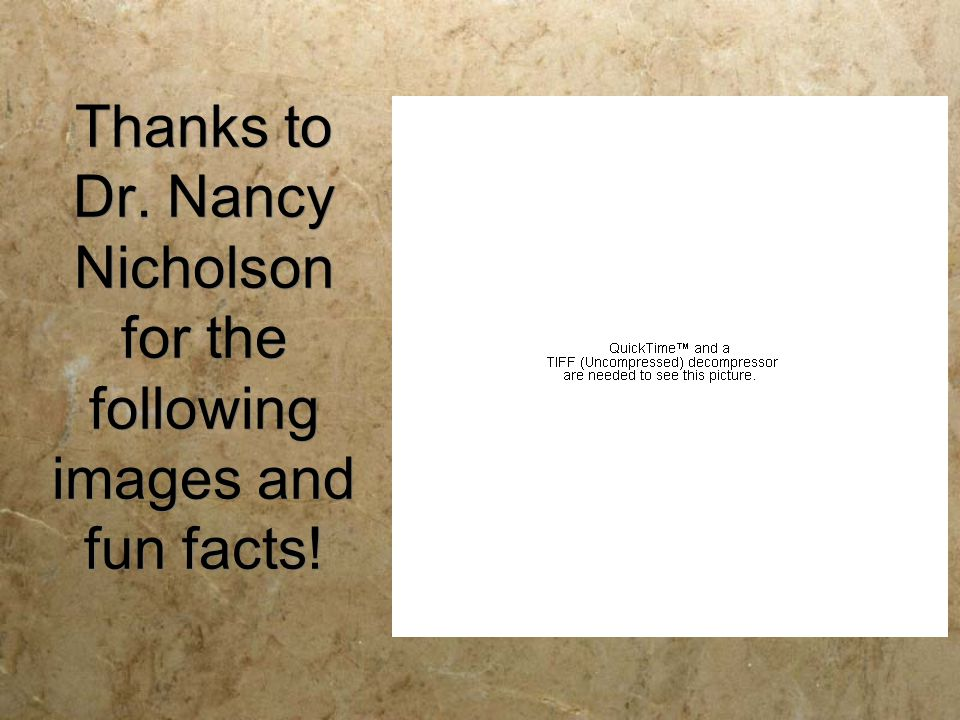 Thanks to Dr. Nancy Nicholson for the following images and fun facts!