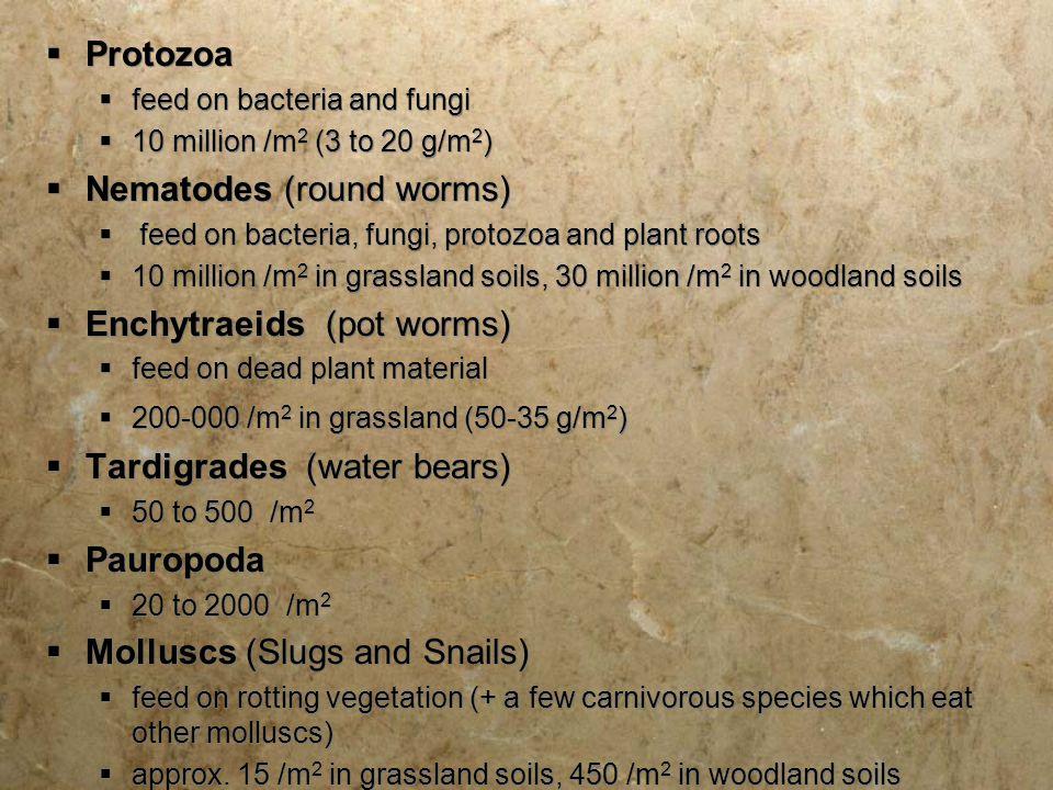  Protozoa  feed on bacteria and fungi  10 million /m 2 (3 to 20 g/m 2 )  Nematodes (round worms)  feed on bacteria, fungi, protozoa and plant roo