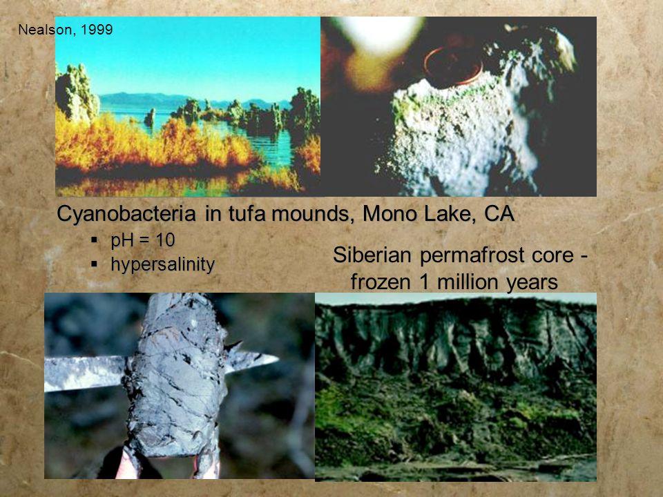 Cyanobacteria in tufa mounds, Mono Lake, CA  pH = 10  hypersalinity Siberian permafrost core - frozen 1 million years Nealson, 1999