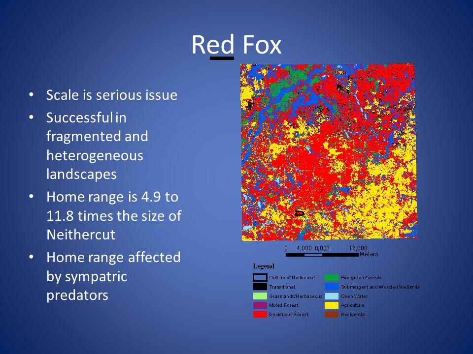 Red Fox Predators: man, coyote, wolf Man mortality: hunt and harvest 83%, car kills 11% Diseases play minor role