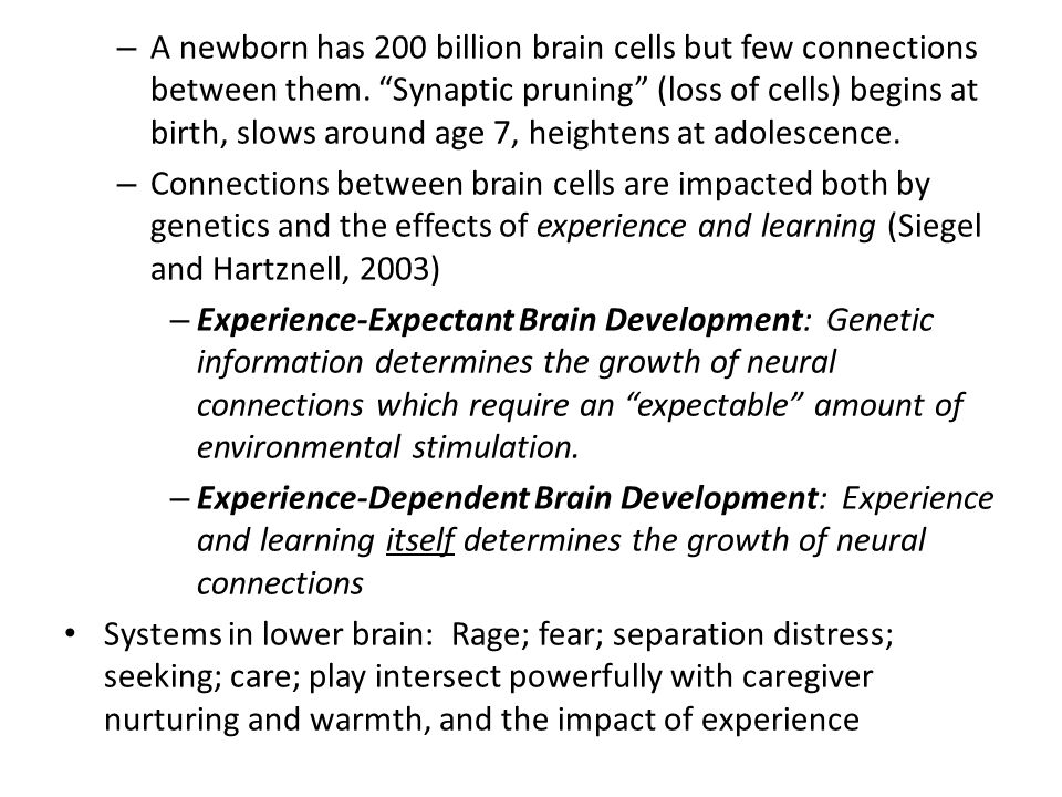 Neocortex-- Rational Brain: The higher brain, frontal lobes.