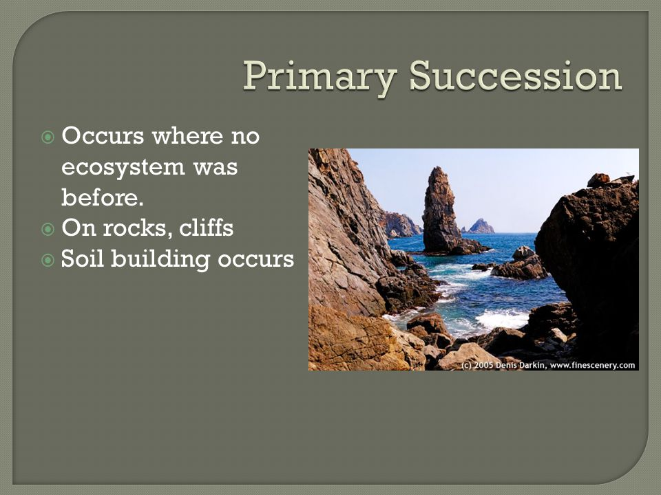  Occurs where no ecosystem was before.  On rocks, cliffs  Soil building occurs