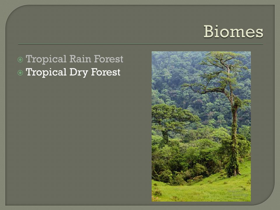  Tropical Dry Forest