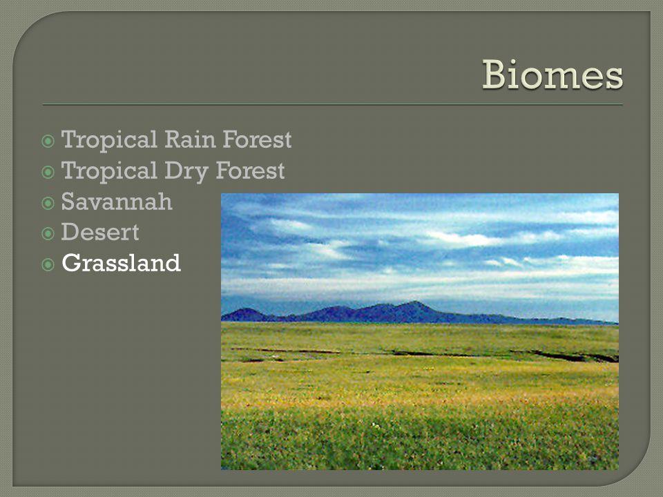  Tropical Rain Forest  Tropical Dry Forest  Savannah  Desert  Grassland