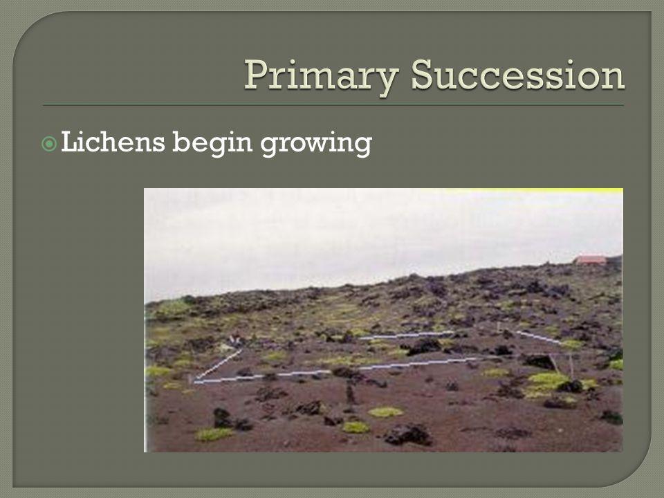  Lichens begin growing
