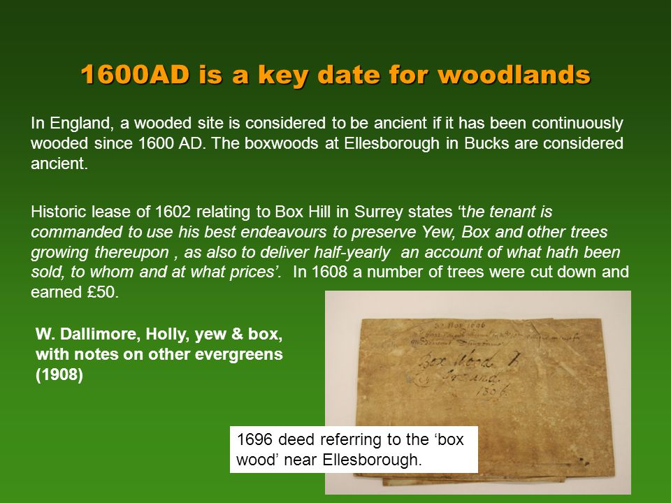 1600AD is a key date for woodlands In England, a wooded site is considered to be ancient if it has been continuously wooded since 1600 AD.