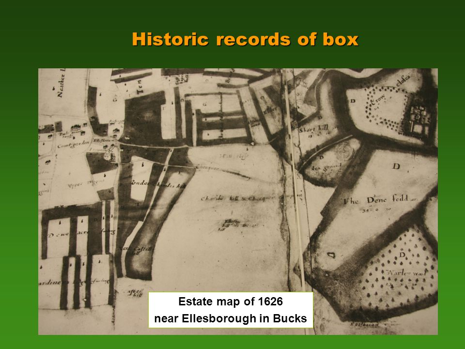 Historic records of box Estate map of 1626 near Ellesborough in Bucks