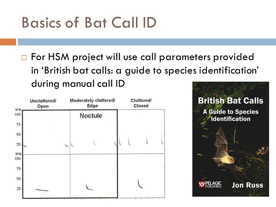  For HSM project will use call parameters provided in 'British bat calls: a guide to species identification' during manual call ID Basics of Bat Call