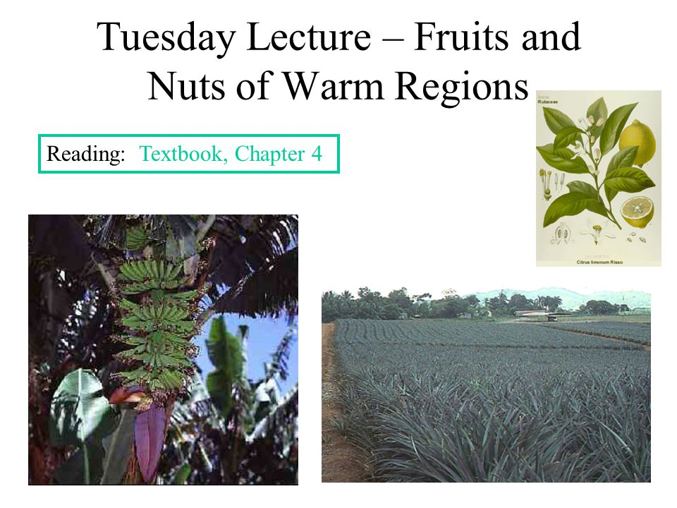Tuesday Lecture – Fruits and Nuts of Warm Regions Reading: Textbook, Chapter 4