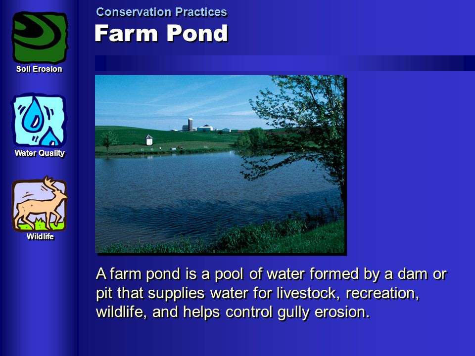 Farm Pond Conservation Practices A farm pond is a pool of water formed by a dam or pit that supplies water for livestock, recreation, wildlife, and he
