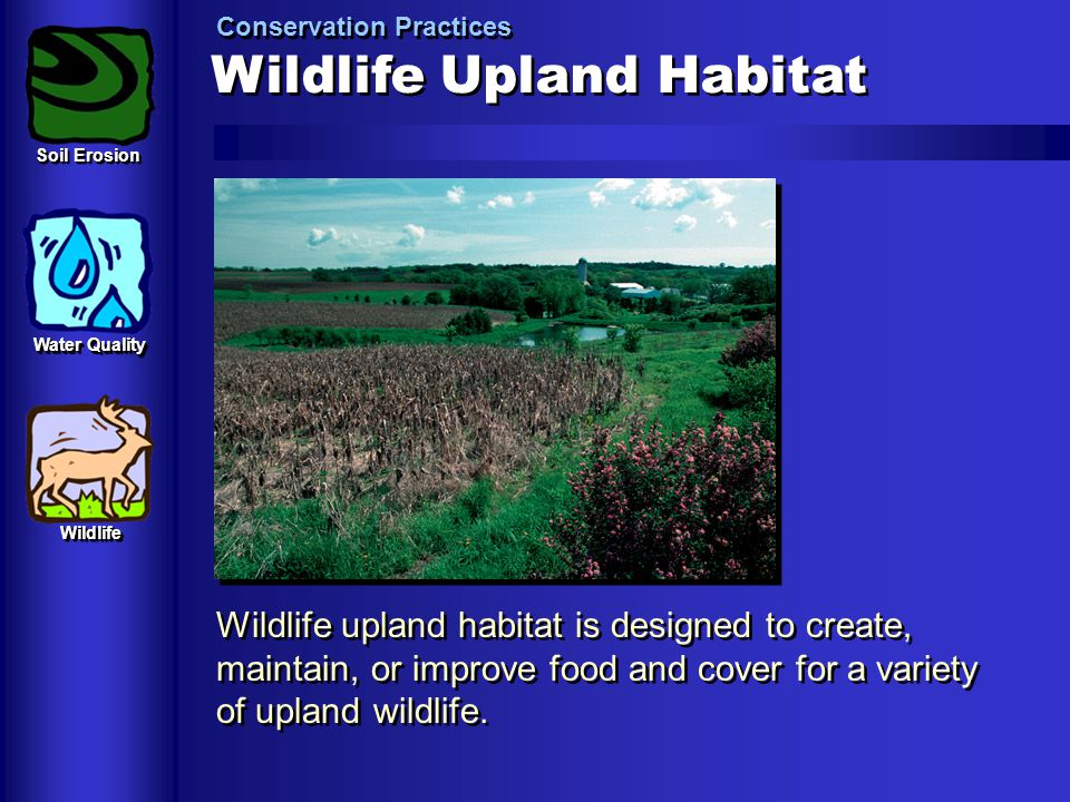 Wildlife Upland Habitat Conservation Practices Wildlife upland habitat is designed to create, maintain, or improve food and cover for a variety of upl