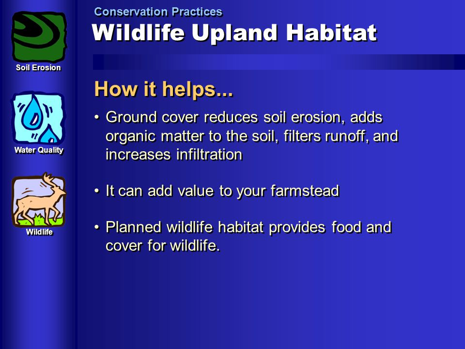 Wildlife Upland Habitat Conservation Practices How it helps... Ground cover reduces soil erosion, adds organic matter to the soil, filters runoff, and