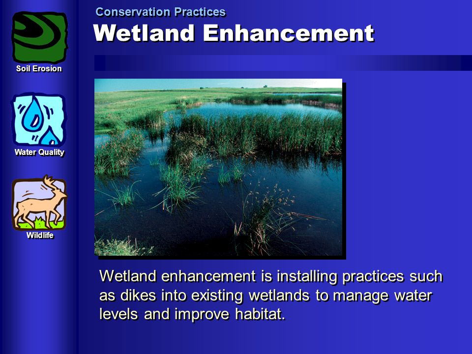 Wetland Enhancement Conservation Practices Wetland enhancement is installing practices such as dikes into existing wetlands to manage water levels and