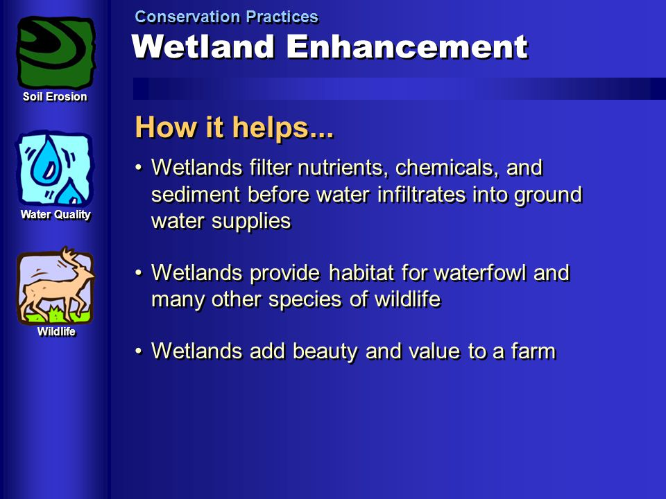 Wetland Enhancement Conservation Practices How it helps... Wetlands filter nutrients, chemicals, and sediment before water infiltrates into ground wat