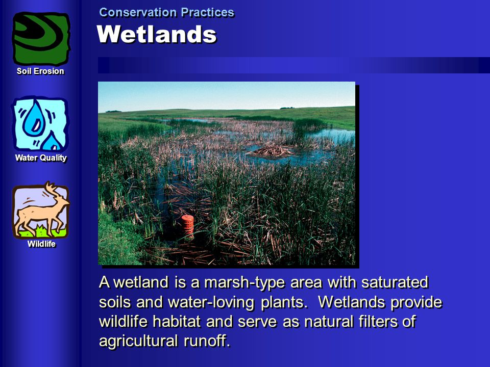 Wetlands Conservation Practices A wetland is a marsh-type area with saturated soils and water-loving plants. Wetlands provide wildlife habitat and ser