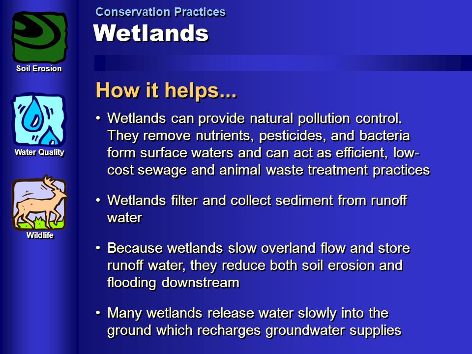 Wetlands Conservation Practices How it helps... Wetlands can provide natural pollution control. They remove nutrients, pesticides, and bacteria form s