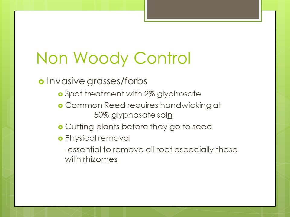 Non Woody Control  Invasive grasses/forbs  Spot treatment with 2% glyphosate  Common Reed requires handwicking at 50% glyphosate soln  Cutting plants before they go to seed  Physical removal -essential to remove all root especially those with rhizomes