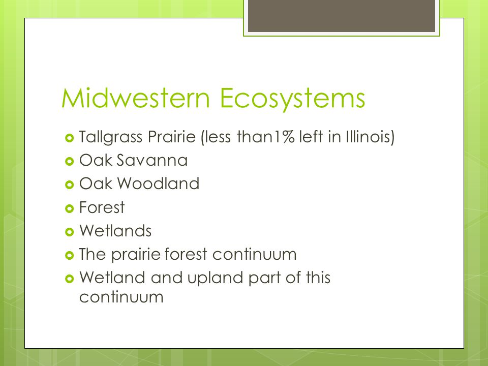 Midwestern Ecosystems  Tallgrass Prairie (less than1% left in Illinois)  Oak Savanna  Oak Woodland  Forest  Wetlands  The prairie forest continuum  Wetland and upland part of this continuum