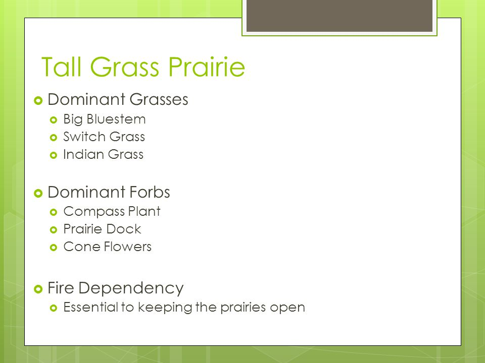 Tall Grass Prairie  Dominant Grasses  Big Bluestem  Switch Grass  Indian Grass  Dominant Forbs  Compass Plant  Prairie Dock  Cone Flowers  Fire Dependency  Essential to keeping the prairies open