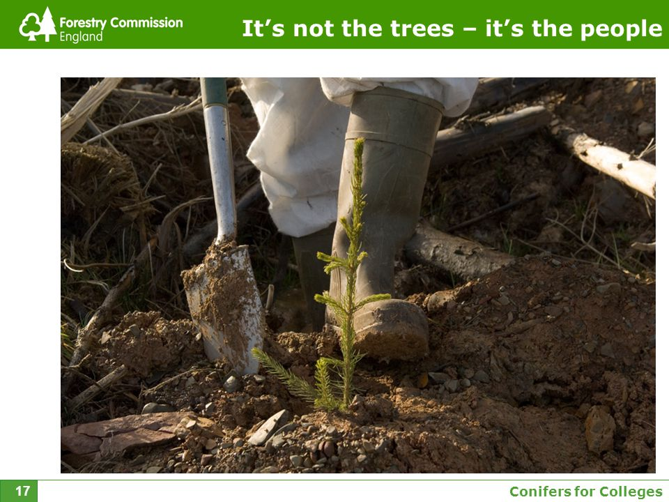 Conifers for Colleges 17 It's not the trees – it's the people
