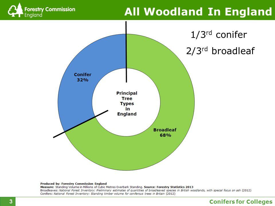 Conifers for Colleges 4 Broadleaf woodland in England 5 species make up 77% of the total Acute Oak Decline Oak processionary moth ChalaraGrey Squirrel Deer Drought Chestnut Blight Phytophthora alni