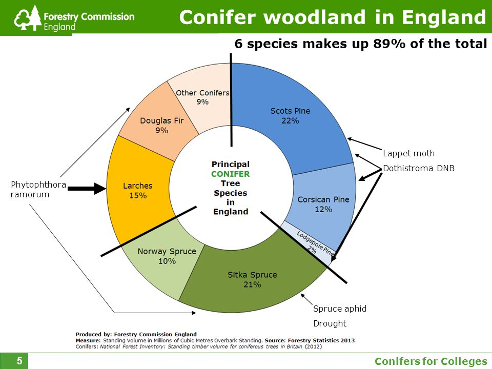Conifers for Colleges 5 Conifer woodland in England 6 species makes up 89% of the total Lappet moth Dothistroma DNB Phytophthora ramorum Spruce aphid Drought