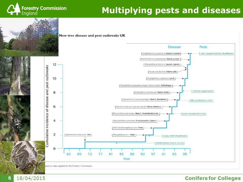 Conifers for Colleges 6 18/04/2015 6 Multiplying pests and diseases